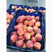 Продаем персик оптом от производителя
