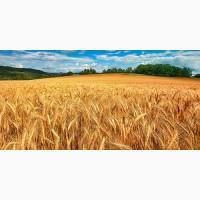 Куплю зерновые и отходы зерновых