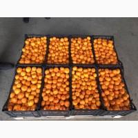 Свежие мандарины Турция Абхазия