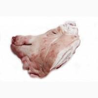 Закуповуємо оптом свинні та яловичі субпродукти