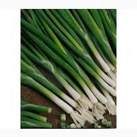 Лучек зеленый разной длинны