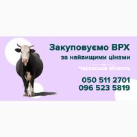 Закуповуємо ВРХ у населення Черкаської області