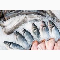 Свежемороженая морская рыба куплю