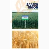 Озима Пшениця ТОБАК (І Репродукція)