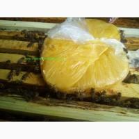 Подкормка пчел канди