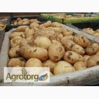 Продаємо картоплю