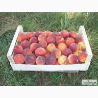 Продам оптом персики