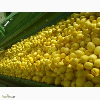 Продам Лимон ( Испания )