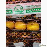 Продам мандарины оптом, от 1 тонны