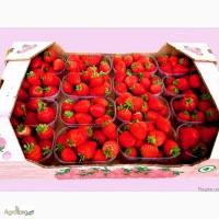 Тара для ягоды, малины, персика, клубники, винограда, вишни