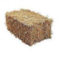 Солома ячменя, пшеницы