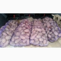 Продам картофель второго сорта для столовых