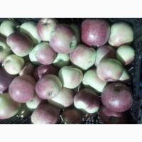 Продам яблоки оптом: Вильямс Прайд, Граф Эззо, Делькорф