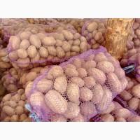 Продам смачну товарну картоплю