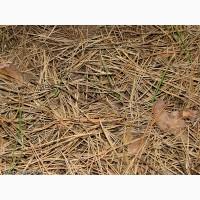 Подстилка хвойного леса в мешках Киев Хвойные колючки купить Киев Сосновые колючки продажа