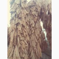 Продається листя тютюну