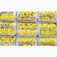 Свежие бананы Эквадор Турция