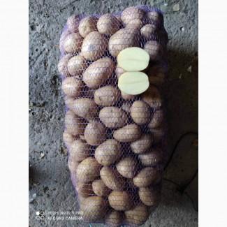 Купим товарный, бюджетный, посадочный картофель в больших объёмах