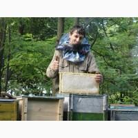 Продам свіжовикачаний мед Акація