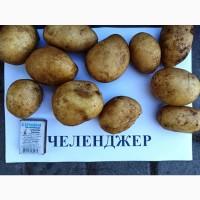 Картопля Челенджер, відміної якості