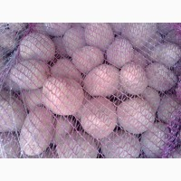 Продается картофель разных сортов семенной, товарный, бюджетный