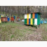 Продам павильон типа Берендей на 22 пчелосемьи, ульи лежак 10 штук