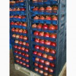 Оптовая продажа цитрусовых с Турции