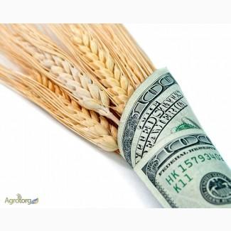 Закупаем пшеницу от 25т. по Украине, расчет сразу