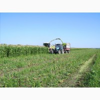 Уборка кукурузы на силос Винница услуги силосоуборочного комбайна уборка силоса