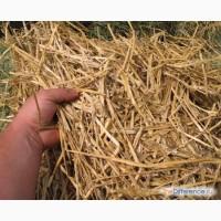 Закупаем солому пшеничную