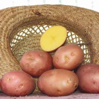 Картофель 5+ оптом от производителя 5 грн./кг