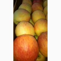 Продам яблоко на експорт