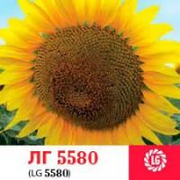 Cемена подсолнечника Limagrain LG5580