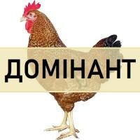 Інкубаційне ЯЙЦЕ курей ДОМІНАНТ. Яєчний крос домінант з Чехії. Вихід від 80% ціна 13 грн