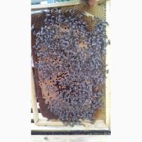 Продам пчелосемьи, пчелы, улья, рамки, сушку