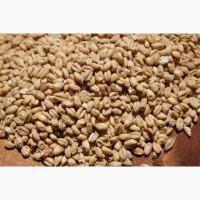 Підприємство купляє пшеницю+організовуємо доставку