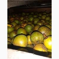 Продам грушу Золотоворотская оптом
