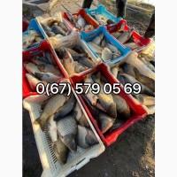 Перевозка зарыбка и живой рыбы в любую погоду