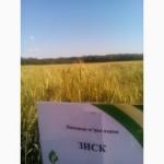 Пшеница озимая Зиск -Семена Зыск Элита