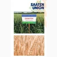 Озима Пшениця СКАГЕН (І Репродукція)