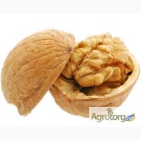 Закупаем бойный грецкий орех в скорлупе нового урожая
