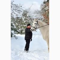 Орловская рысистая, читопородная лошадь кобыла