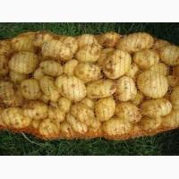 Продам молодой картофель урожая 2018 г
