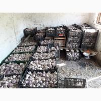Продам чеснок урожая 2019-го года, сорт Любаша