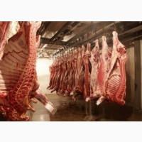 Закуповуємо свиней на м`ясо живою вагою, по вси Україні
