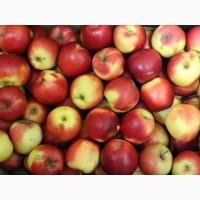 Закупаем яблоки первого сорта оптом