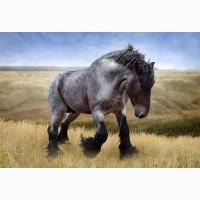Куплю коней, лошат на м`ясо дорожче за м'ясокомбінат