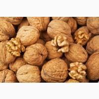 Куплю грецкий орех у населения и заготовщиков