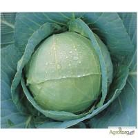 Продам семена Капуста белокочанная поздняя Анкома F1