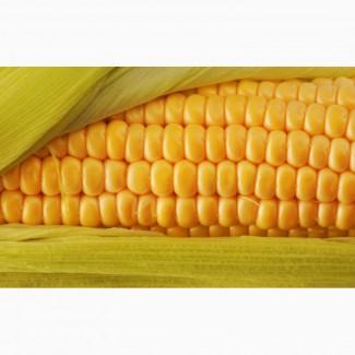 Куплю кукурузу и другие культуры (опт)